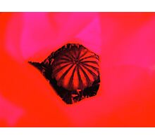 Cut and paste poppy Photographic Print
