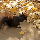 Squirrel in the Fall by Heather Eeles