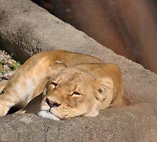 sleeping beauty by Penny Rinker