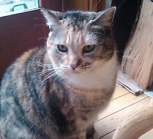 Pretty Tabby Cat Watching the World by darkesknight
