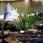 Pond Log by Cheryl Craig