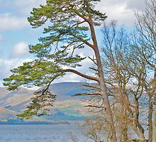 The Bonnie Banks of Loch Lomond by Nick Field