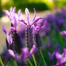 A Garden of Lavender by Tyson Battersby