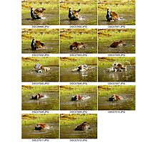 14 frames at 10 frames per second Photographic Print