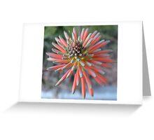 Aloe vera flower Greeting Card