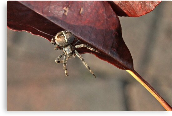 Along Came a Spider by dilouise