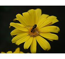 Busy Bumble Bee Photographic Print