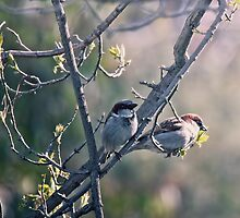 Two Little Birds by yolanda
