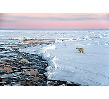 Polar bear on Fram Strait ice floe Photographic Print