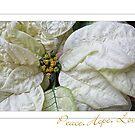 White Poinsettia Peace Love Hope Christmas Card by LouiseK