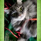 Sweet Pea Kitty Cat Christmas Card   by LouiseK
