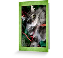 Sweet Pea Kitty Cat Christmas Card   Greeting Card