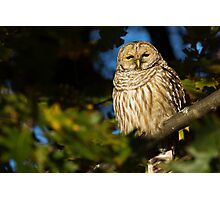 Autumn Barred Owl Photographic Print