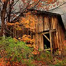 """"""" The Hideout in the Back Forty """" by canonman99"""