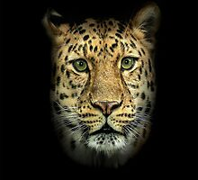 Amur Leopard iPhone Cover by Mark Hughes