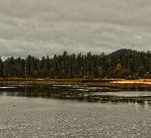 Woodland Lake by photecstasy