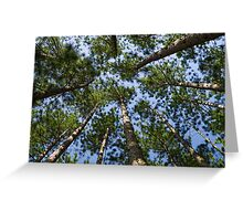 Conifer Canopy Greeting Card
