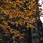Autumn leaves by bobbykim666