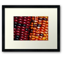 Ears of Indian Maize Framed Print