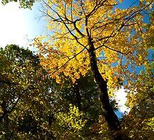 Rising Tree by Adam Bykowski