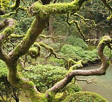 Japanese Gardens Portland, OR. by Keith Farris