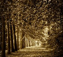 An Avenue of Trees by Debra Fedchin