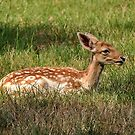 The Fawn by Kathy Baccari