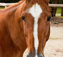 0221 Horse by DavidsArt