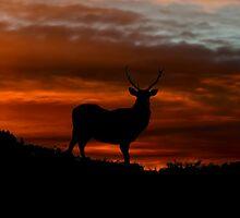 Red Deer Sunset by Fraser Ross