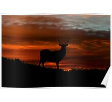 Red Deer Sunset Poster
