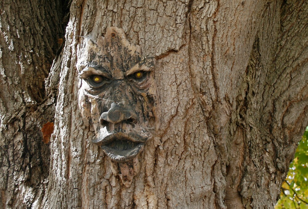 Face in the Tree by Nadya Johnson