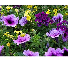 Flower Basket of Color Photographic Print
