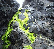 Oregon coast by Keith Farris