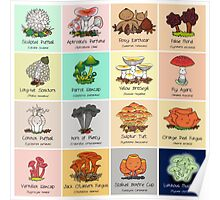 The #FungiFriday Poster! Poster