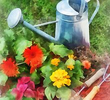 Zinnias and Watering Can by Susan Savad