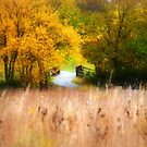 The Winding Prairie Path by Brian Gaynor
