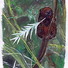 Lemurs.. by kjen20