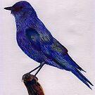 bird by kjen20
