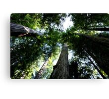 Standing Among Giants Canvas Print