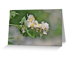 White wild roses Greeting Card