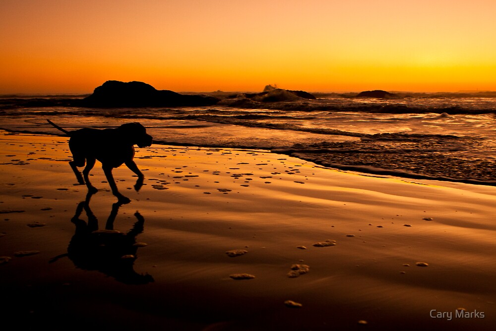 Ruby Beach Pup 01 by Cary Marks