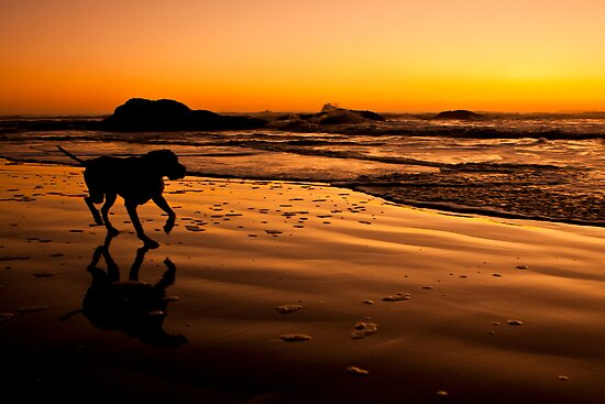 Ruby Beach Pup 01 by chipmarks