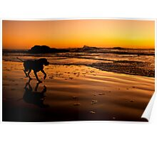 Ruby Beach Pup 01 Poster
