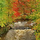 Autumn Red By The Brook by Deborah  Benoit