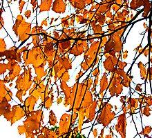 those autumn leaves by Lynne Prestebak