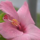 Pink Hibiscus by Shaina Lunde