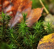 Autumn leaves, ground cover by Chris Coates