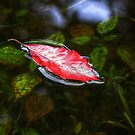 Leaf on the Water 20 by ChuckBuckner