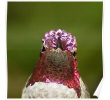 Head with hummingbird crown Poster