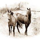 Horses in Sepia by Deborah Clearwater